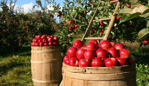 農業を始めるために!おさえるべき3つのポイント