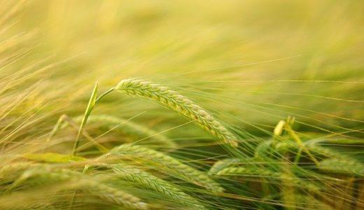 国産野菜の生産加速対策【新型コロナウイルスによる影響】