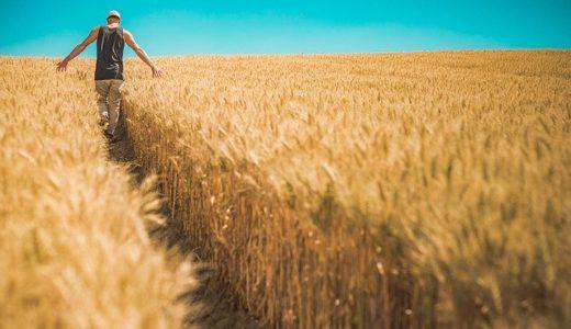 農業で生計を立てるコツ!【稼げる仕組み構築ノウハウ】