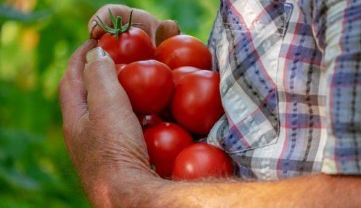 種苗法改正案不成立!農家の負担を考慮した結果へ